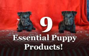 The BEST Puppy Products For Your Breed In 2021